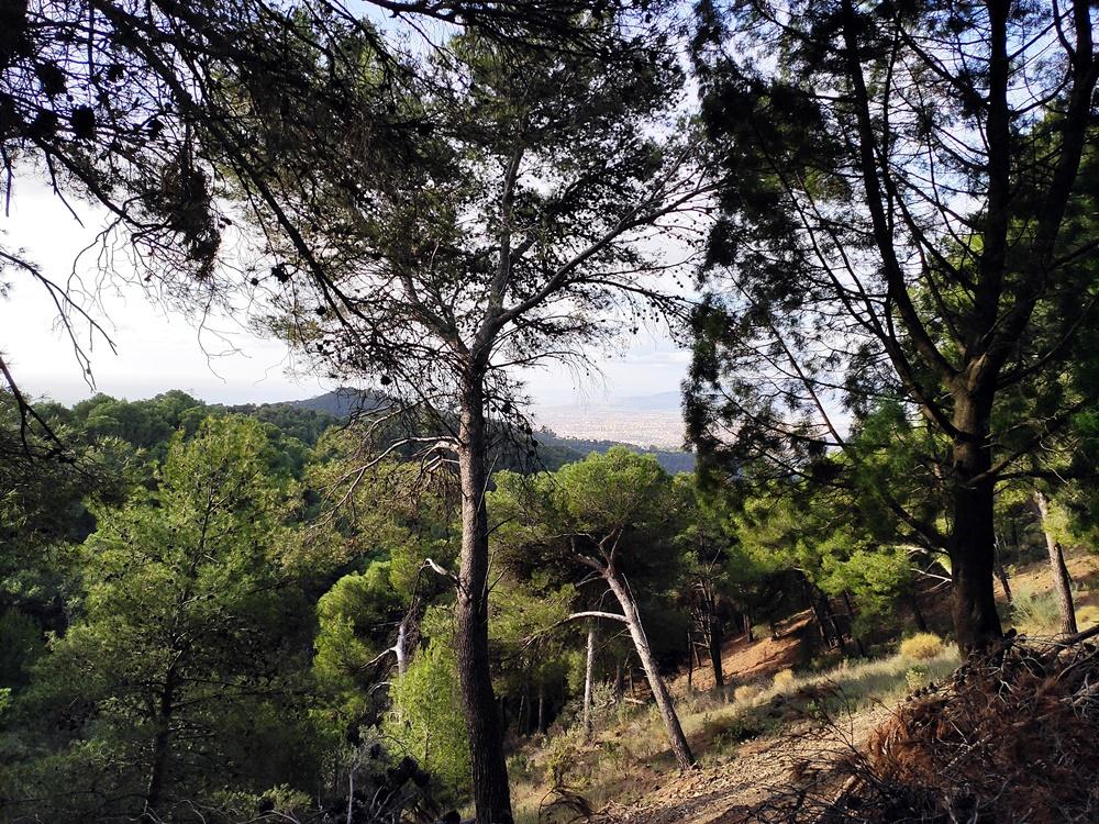 Malaga-Montes-de-Malaga