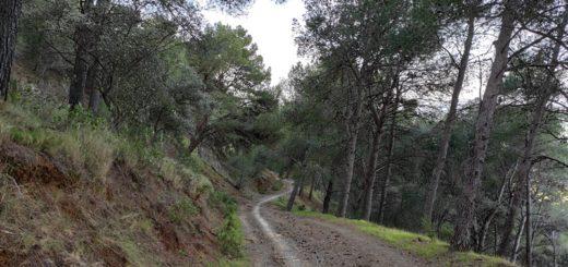 Pista-Forestal-Sendero-Montes-Malaga
