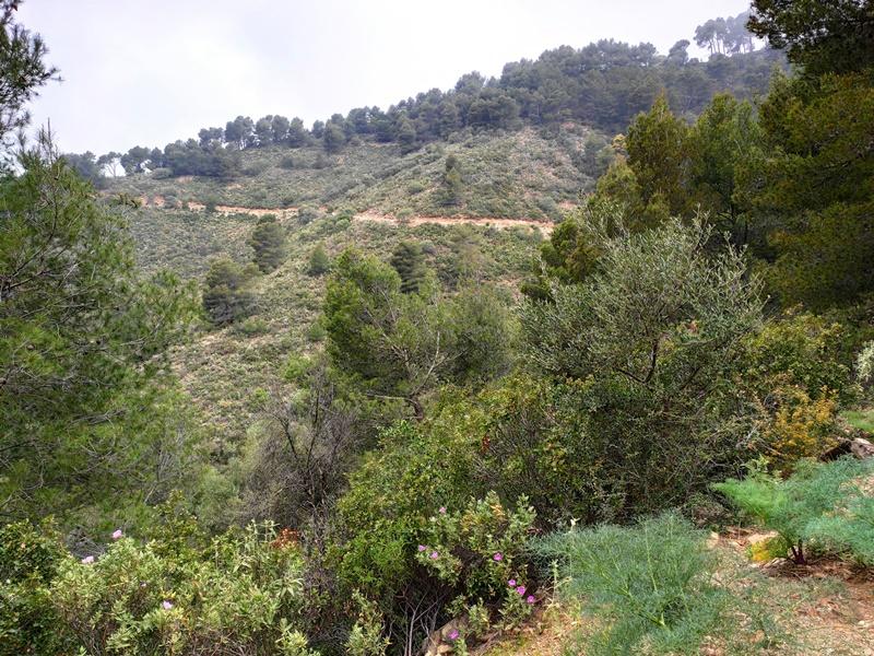 Vistas-Mirador-Pocopan-Malaga