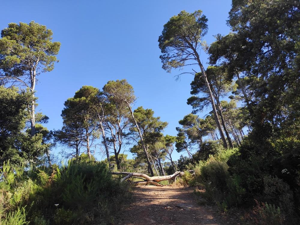 Paisaje-Montes-Malaga-Mirador-Cochino