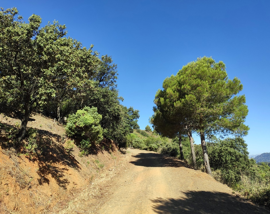 Pista-Forestal-Mirador-Cochino-Malaga